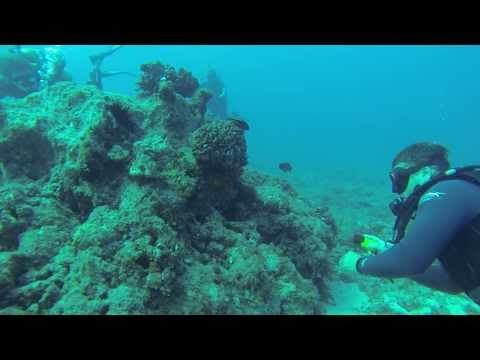 Hawaii Trip - Scuba Dive #2 - V's Underwater Navigation