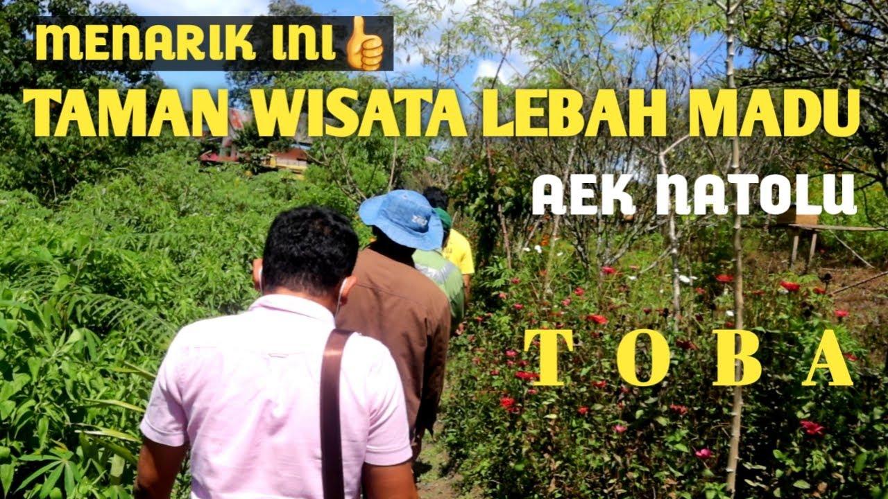 Wisata Tematik : Taman Wisata LEBAH MADU di Aek Natolu Lumbanjulu, TOBA.
