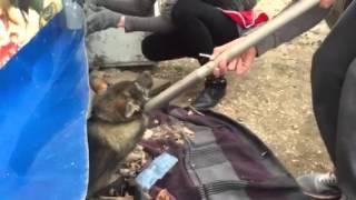 Камыши-собака Маруся , перелом таза.