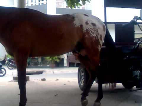 Ku Ngua - Ku Ngựa - HaL - www.MayTinhSaiGon.com - (08) 22 39 28 35
