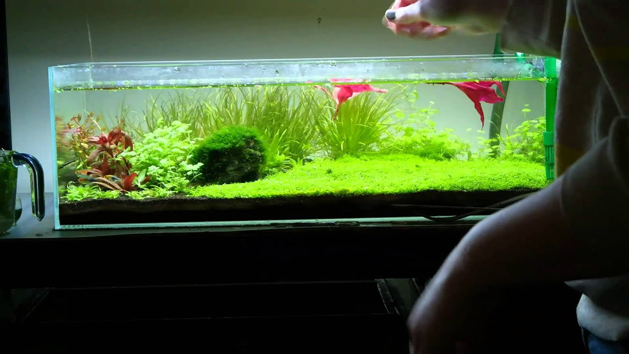 Freshwater aquarium fish maintenance - Freshwater Aquarium Fish Maintenance