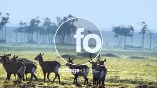 Antilope Africa footage 014974 UHD