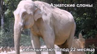 Животные рекордсмены