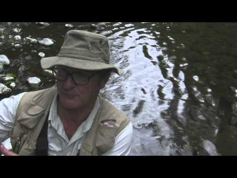 Episode 5: Coastal Cutthroat Trout in Western Oregon
