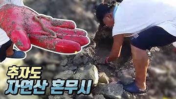 참갯지렁이(혼무시) 캐는 방법! / 낚시n캠핑/ Camping&MukBang / Eating Show
