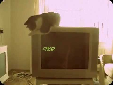 Stupid cat.