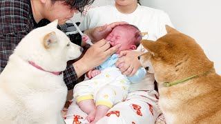 Dogs Worrying about Sick Baby