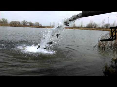 Stocking Fish In Our Favorite Lake