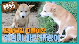 행방불명! 위험에 빠진 떠돌이犬 '사랑이' I TV동물농장 (Animal Farm)   SBS Story