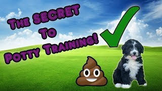 The Secret to Potty Training Your AussieDoodle