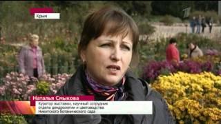 видео Как черенковать хризантемы