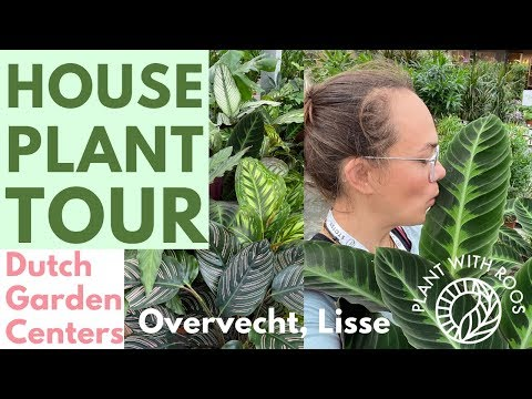 House Plant Garden Center Tour | Go Shopping With Me At Overvecht Lisse | Plant With Roos