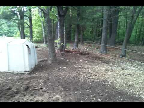 Gallagher Smart Fence And Pigs
