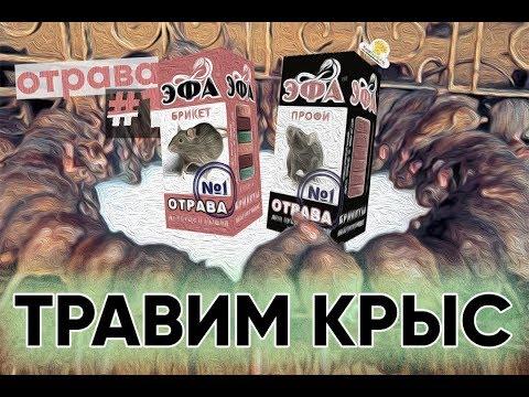 Лучшая отрава для крыс и мышей.Дезинсекция дератизация.Отрава#1