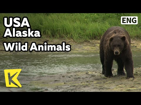 【K】USA Travel-Alaska[미국 여행-알래스카]야생동물 보호센터/Wild Animals/Alaska Wildlife Conservation Center