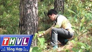"""THVL   Người đưa tin 24G: Phát hiện thêm một rừng thông bị """"đầu độc"""" bằng hóa chất tại Lâm Đồng"""