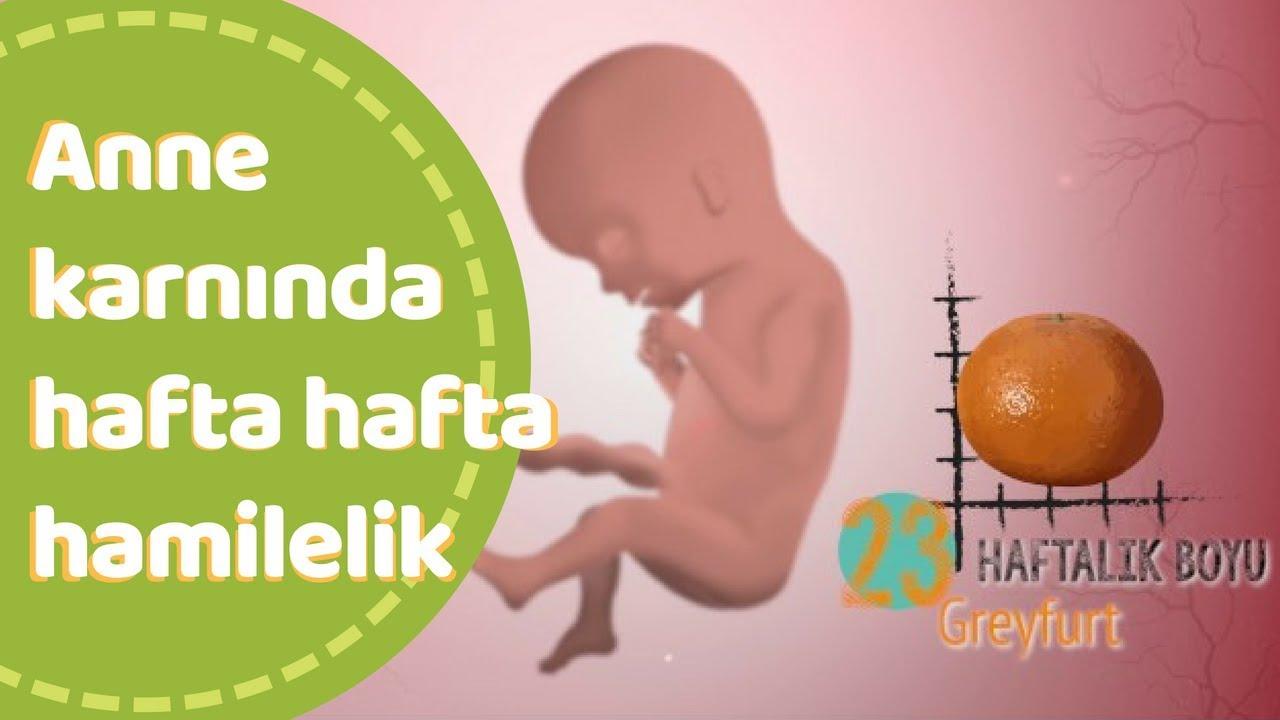 Haftaya göre gebelik. Fetusun gelişimi