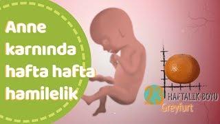 Anne karnında hafta hafta bebek gelişimi