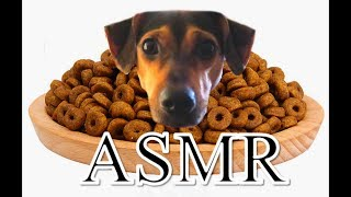 Taz (our dog) dog food ASMR | The Barkers