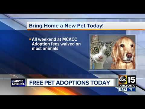 Free pet adoptions this weekend in Valley!