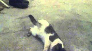 Кошка после наркоза / cat wakes up after anesthesia (Juice-Team!)