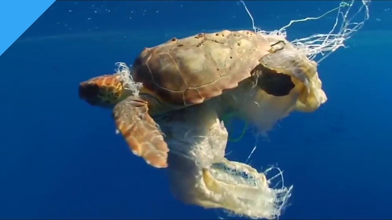 el septimo continente la isla de plastico flota en el pacifico youtube