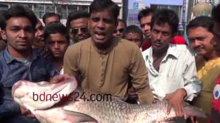 Fish weighing 30kg caught