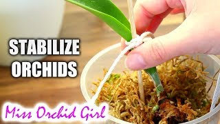 How to stabilize Orchids with no (or very few) roots - Common ways and materials