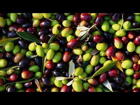 La grande crisi dell'olio d'oliva spagnolo. Crollano le esportazioni negli USA