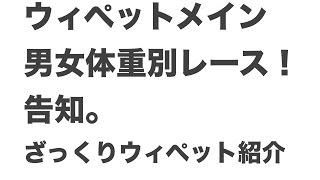 ウィペットメイン 男女体重別レース!告知。ざっくり参加ウィペット紹介...