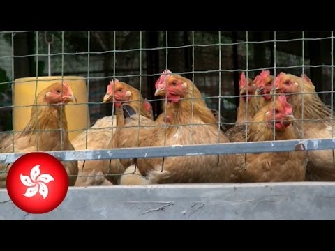 Hong Kong confirms first human case of H7N9 bird flu