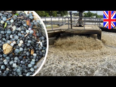 Sewage plants leaking millions of tiny plastic beads into British seas - TomoNews