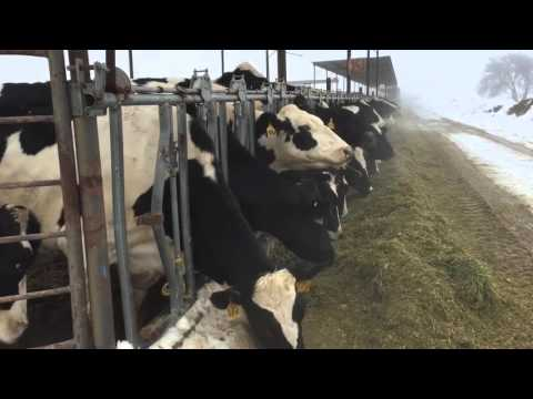 New Mexico dairy producers: It's been a tough few days