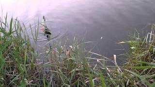 Рыбалка в болгарии(Рыбалка в болгарии на карпа шаран., 2014-07-17T18:23:19.000Z)