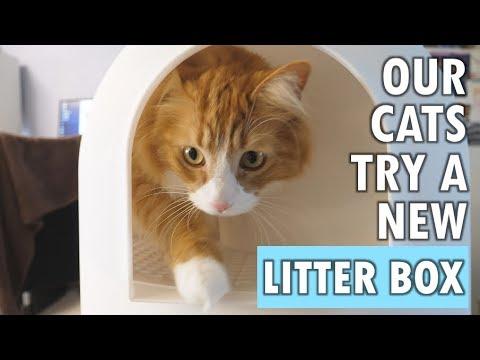 Bounce Stainless Steel Cat Litter Pan Review Worldnewscom