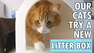 Our cats try a 'litter tracking prevention' litter box