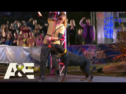 Doberman Rogue Competes 3 Months After Having Puppies | America's Top Dog (Season 1) | A&E
