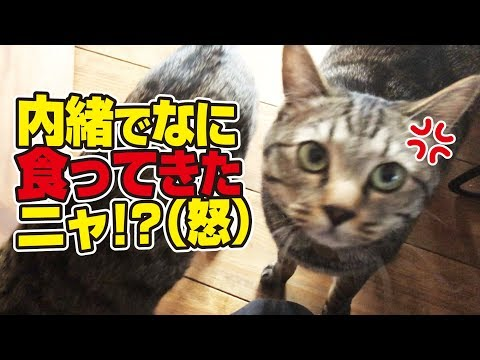 猫さんたちから事情聴取を受ける父と母!