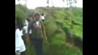 Download Video video saat di kebun teh.3gp MP3 3GP MP4