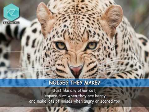 Fun Facts About Leopards - Kids Education With KZ Learning