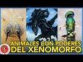 watch he video of 6 ANIMALES CON HABILIDADES DEL XENOMORFO