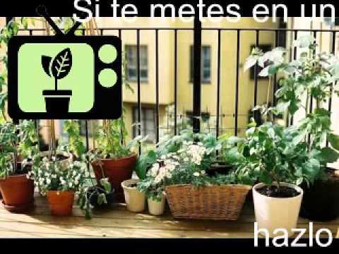 Consejos de Jardineria] Consejo 6 | Jardinería en Casa - YouTube