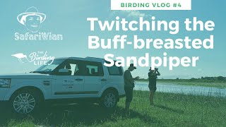 Birding Vlog #4 Buff-breasted Sandpiper Twitch | The Birding Life