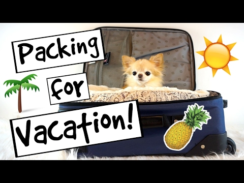 CUTE PUPPY size chihuahua packing for VACATION