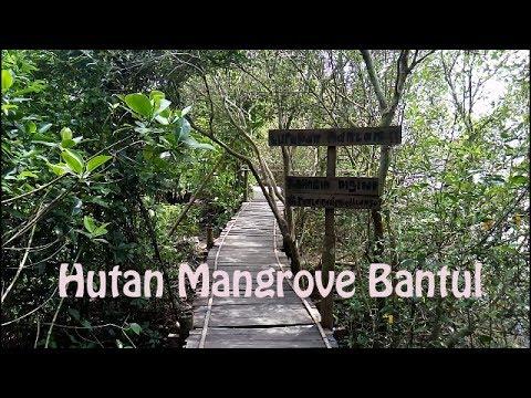 Image result for hutan mangrove bantul