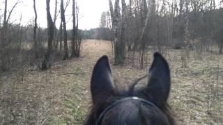 Wyjazd w teren. Sarny, para. Koza i kozioł.