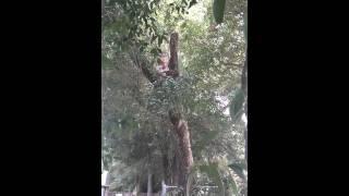 Tony's tree work (:(6)