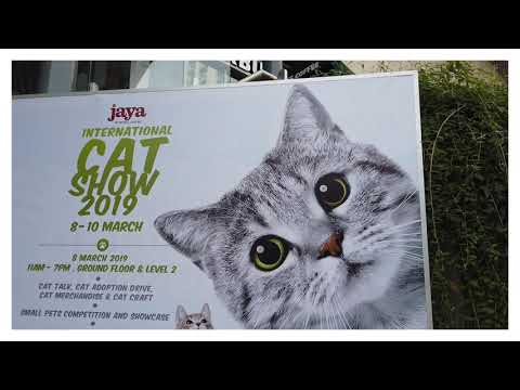 International Cat Show 2019🐯🐯