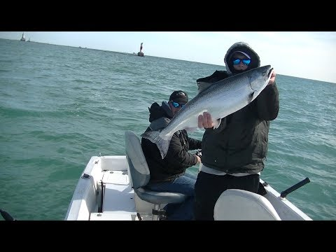 Chicago Lakefront Coho And King Salmon!!!