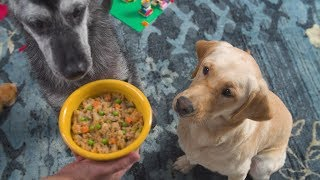 You've never seen dog food like this before | PetPlate